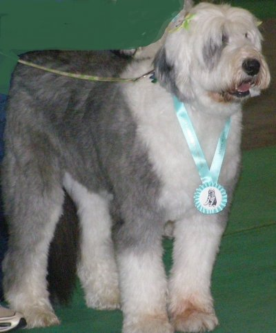 Here's what's new in our world!!!! :: Old English Sheepdog