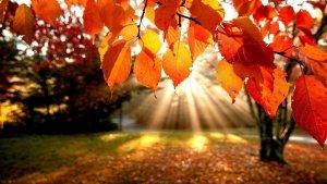 Fall Shine