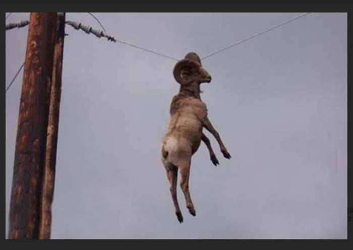 ram on wire
