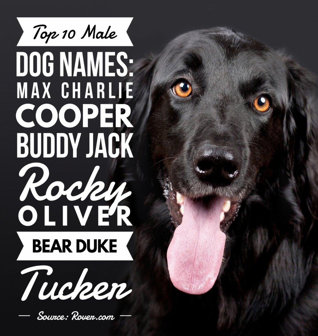 Top 10 Male Dog Names