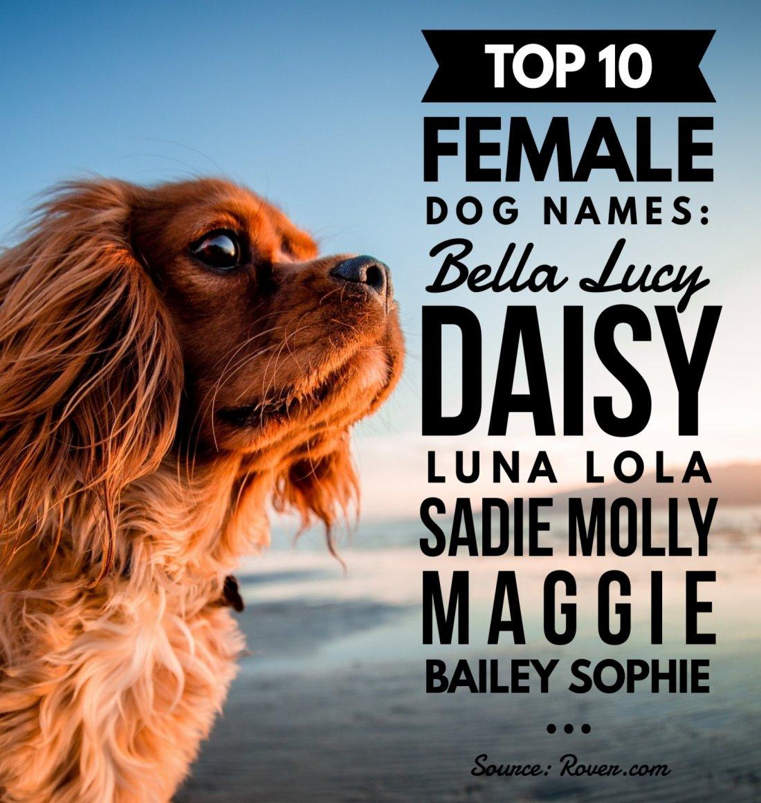 Top 10 Female Dog Names