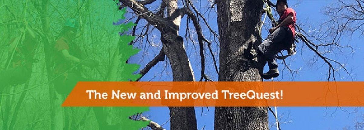 Tree Quest Adventure