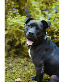 adopt samson gwinnett animal shelter
