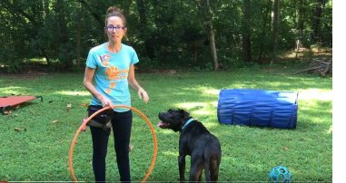 fun with dog obedience training