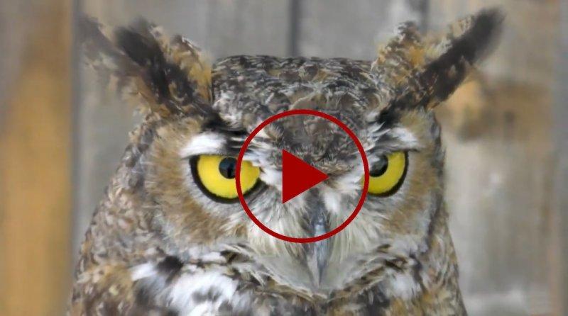 Rescue owl